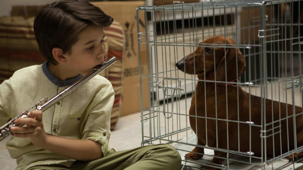 Wiener-Dog16583-1-1100